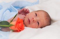 Newborn baby Royalty Free Stock Image