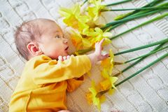 Newborn baby with bunch of yellow narcissus. Newborn baby girl lying on knitted blanket with bunch of yellow narcissus stock images