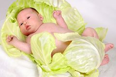 Newborn baby  in cabbage leaves Royalty Free Stock Photos