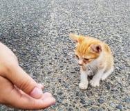 Baby kitten royalty free stock photography