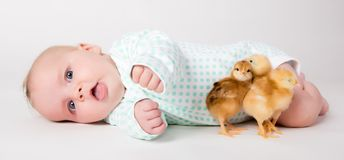 Newborn baby with chicks. Royalty Free Stock Photography