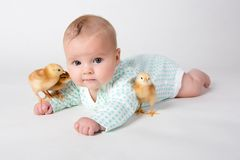 Newborn baby with chicks. Three chicks and a cute little newborn baby Stock Photos