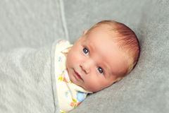 Newborn baby is 9 days old lies wrapped over a gray background. Stock Images