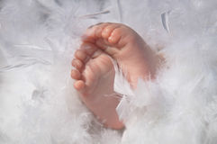 Newborn Baby feet Stock Images