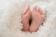 Newborn baby feet Royalty Free Stock Image