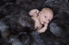 Newborn baby in fur covers Stock Photography