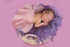 Newborn baby girl ballerina in a basket. Sleeping newborn baby girl ballerina in a basket on a purple blanket Stock Images