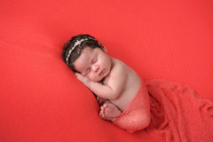 Newborn Baby Girl on a Coral Colored Background Royalty Free Stock Photography