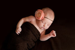 Newborn Baby Girl with Flower Headband Royalty Free Stock Photography