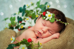 Newborn baby girl has sweet dreams in strawberries Stock Images
