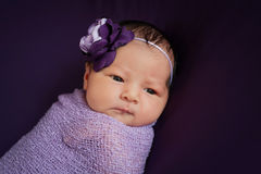 Newborn Baby Girl in Lavender and Purple Stock Images