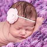 Newborn Baby Girl with Pink Flower. Sleeping newborn baby girl with pink flower headband lying on purple blanket Royalty Free Stock Photography
