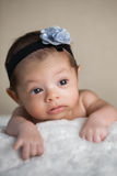 Newborn baby girl portrait royalty free stock images