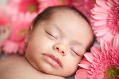 Newborn baby girl sleeping with daisies Stock Photography