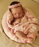 Newborn baby girl sleeping under cozy blanket in basket. Studio photo of cute beautiful newborn baby girl sleeping under cozy blanket in basket Royalty Free Stock Image