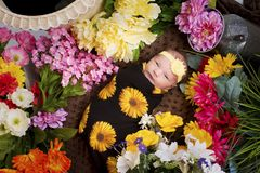 Baby Girl Surrounded by Flowers. Newborn baby girl swaddled and laying among a large amount of flowers Stock Photos
