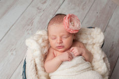 Newborn Baby Girl Wearing a Flower Headband Stock Images