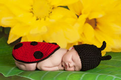 Newborn Baby Girl Wearing a Ladybug Costume Stock Photo