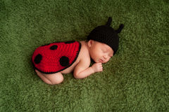 Newborn Baby Girl Wearing a Ladybug Costume Royalty Free Stock Photo