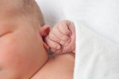Newborn Baby Hand royalty free stock photography