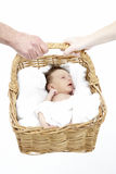 Newborn Baby Held In Basket By Parents Royalty Free Stock Photo