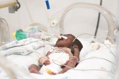 Newborn baby inside incubator. Portrait of newborn baby sleeping inside incubator Stock Photography