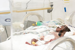 Newborn baby inside incubator Stock Photography