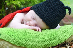 Newborn baby in lady bug costume sleeping on pillow Stock Photos