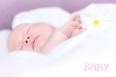 Newborn baby napping Royalty Free Stock Photography
