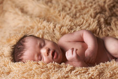 Newborn baby peacefully sleeping Stock Photography