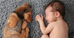 Newborn baby and puppy. Newborn baby girl sleeping next to a dachshund puppy royalty free stock images