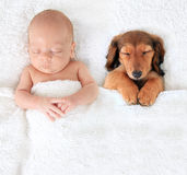 Newborn baby and puppy. Sleeping newborn baby alongside a dachshund puppy royalty free stock photos