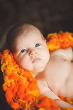Newborn baby resting Royalty Free Stock Images