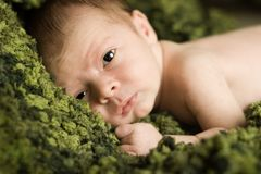 Newborn Baby on a Rich Green Blanket Royalty Free Stock Image