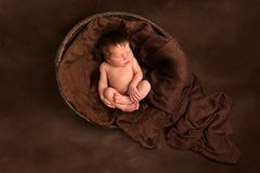 Baby sleeping in old wooden  bowl royalty free stock photo