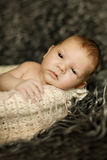 Newborn baby sleeping on fur in the basket Royalty Free Stock Photo