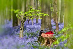 Baby in bluebell forest. Newborn baby sleeping on a tree trunk in a bluebells springtime forest Royalty Free Stock Photo