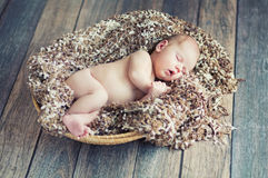 Newborn baby sleeping in wicker basket Stock Image