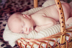 Newborn Baby Sleeps in Basket Stock Photo