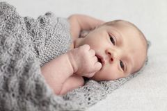 Newborn baby in studio Royalty Free Stock Images