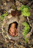 Newborn baby in a tree trunk. Newborn baby sleeping in a hole in a mossy tree trunk Royalty Free Stock Photography