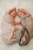 Newborn baby twins. Have sweet dream Royalty Free Stock Photos