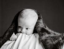 Newborn baby under blanket Stock Photography