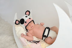 Newborn Baby Wearing a Cow Costume. Studio portrait of a nine day old newborn baby girl wearing a cow costume. She is sleeping on a moon shaped posing prop Royalty Free Stock Images