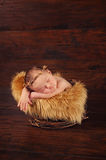 Newborn Baby Wearing a Twig Crown Royalty Free Stock Images