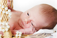 Newborn in the basket Royalty Free Stock Photo