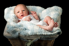 Newborn in a basket Royalty Free Stock Image