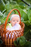 Newborn in the basket Royalty Free Stock Photos