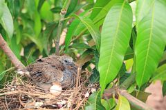 Newborn bird hatched from the egg and the one egg in bird`s nest on tree branch in the nature royalty free stock photo