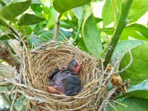 Newborn Bird stock photography